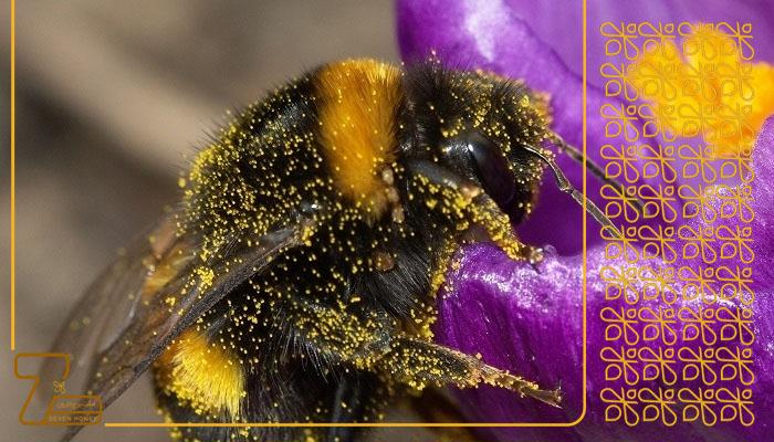 عسل طبیعی چهل گیاه